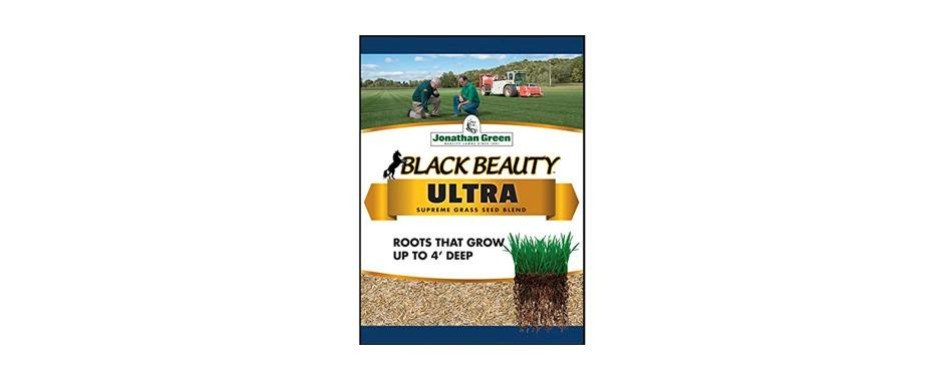 The Best Grass Seed In 2019