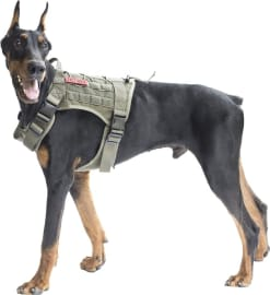 The 10 Best Dog Harnesses 2020