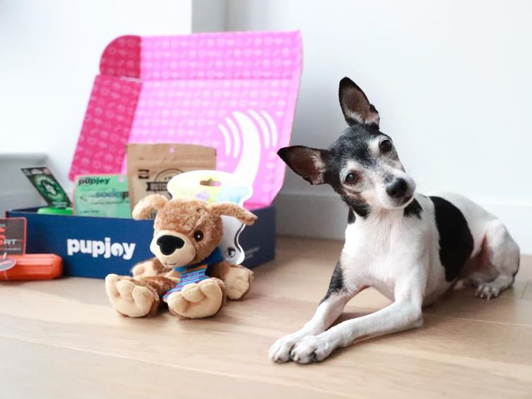 Best dog food delivery services: Pet Plate, Ollie, Chewy and more