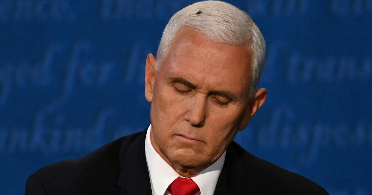 Fly on Mike Pence's head dominates vice presidential ...