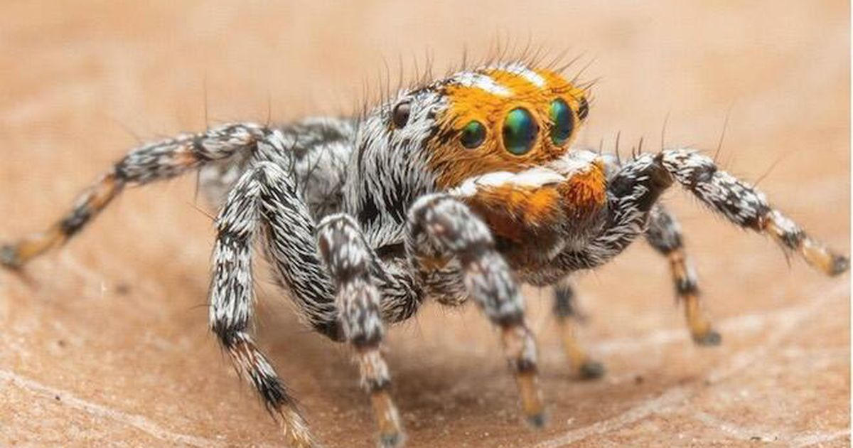 Finding Nemo, the spider: Meet the arachnid that looks like the Pixar star